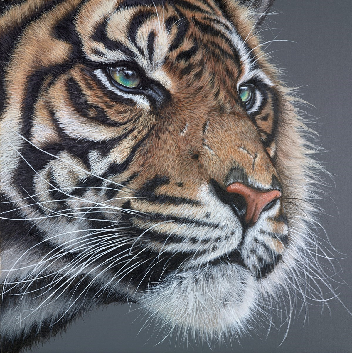 Eye of the Tiger by Gina Hawkshaw -  sized 30x30 inches. Available from Whitewall Galleries